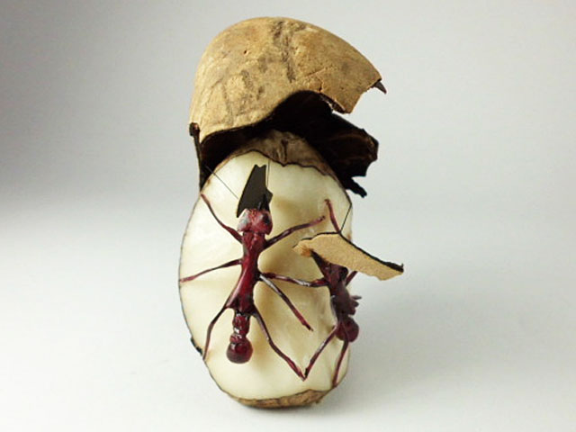 Carved Tagua Insect 0001