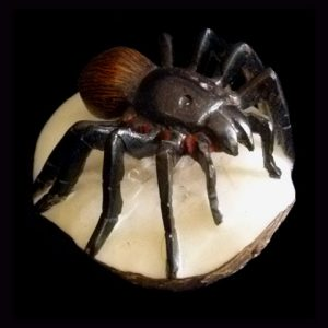 Carved Tagua Insect 0003